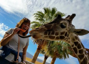 Feeding a giraffe at the Living Desert last week with my family.